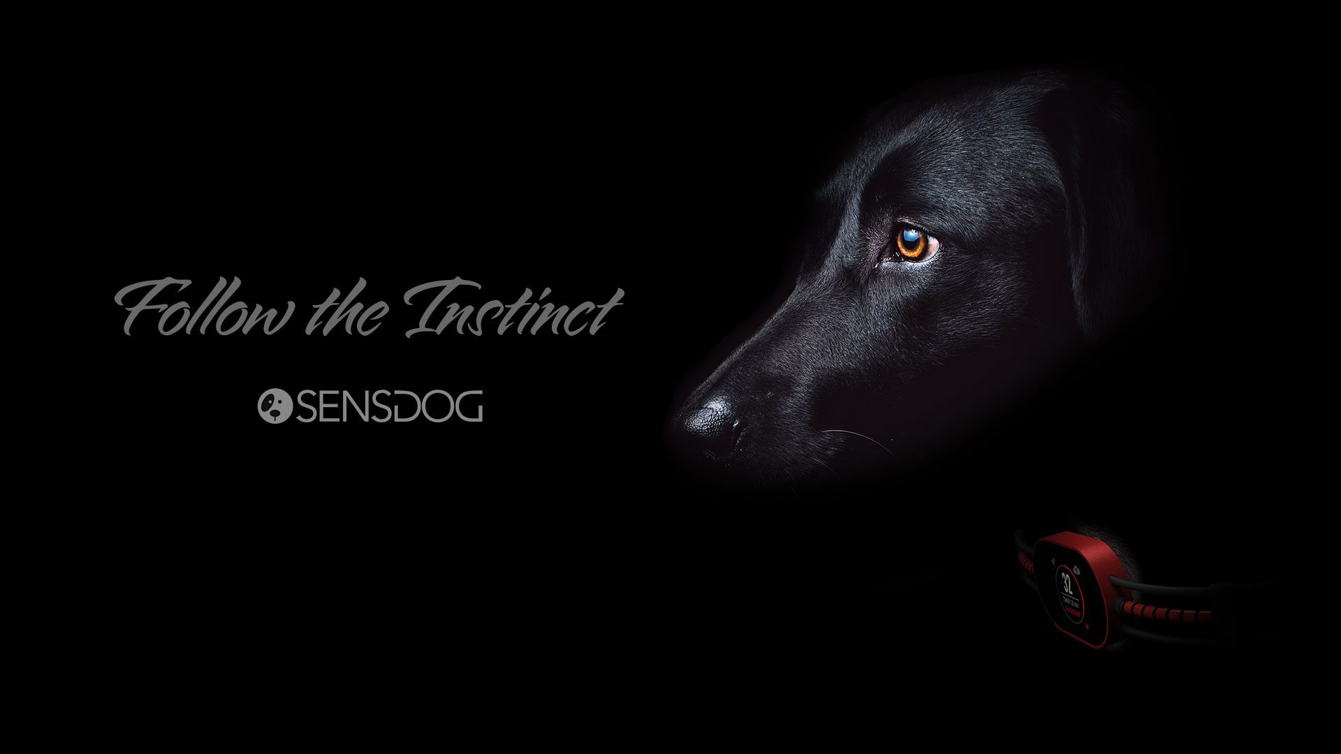 sensdog_dark_dog_photo_screensaver_hd